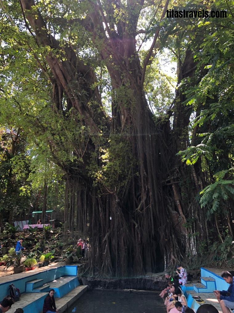 7-tree-fish-spa