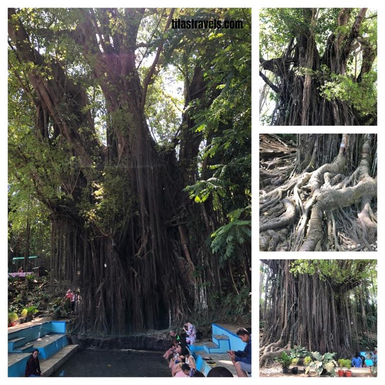 8-tree collage