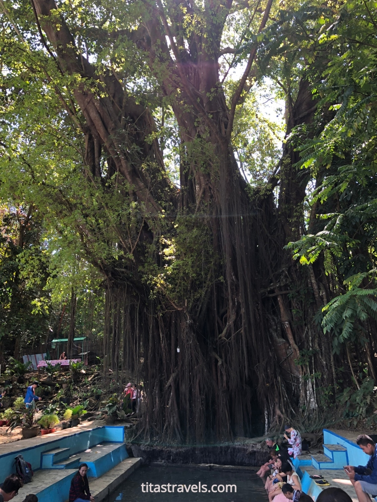 Balete tree-Siquijor-labelled