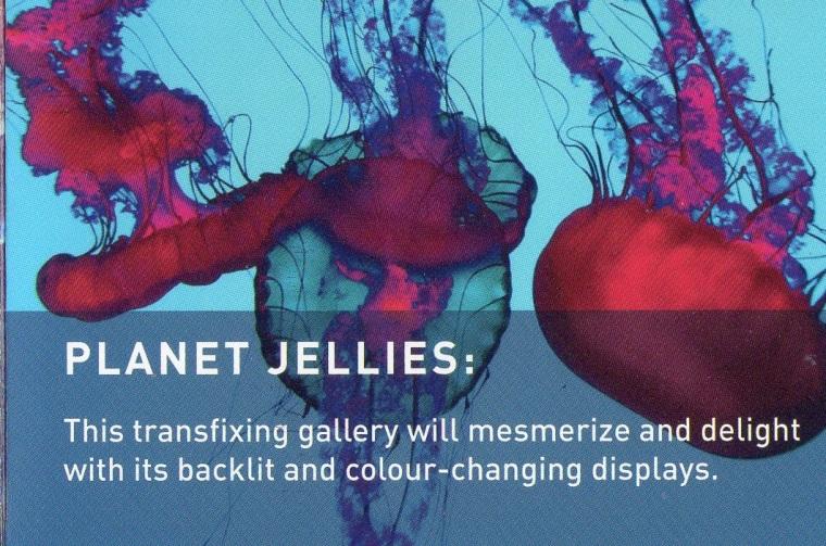 img005-Planet Jellies