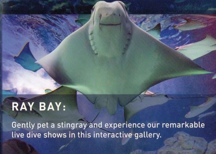 img005-Ray Bay