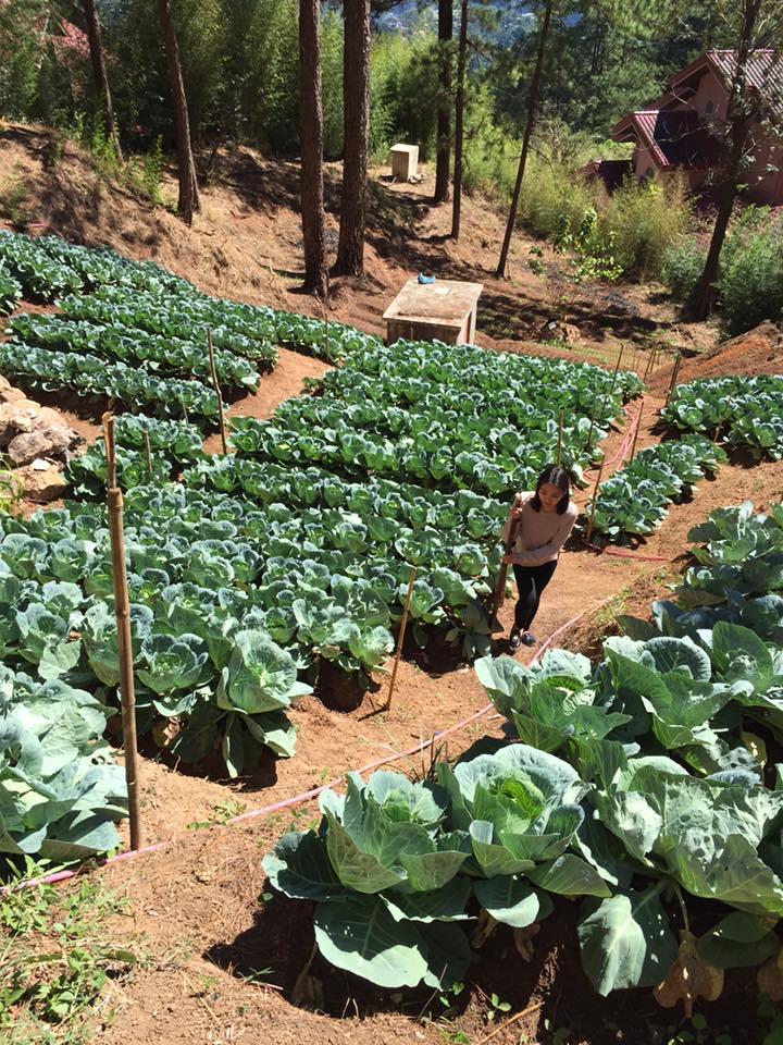 veg garden - Feb 2016 - fr Fb acct